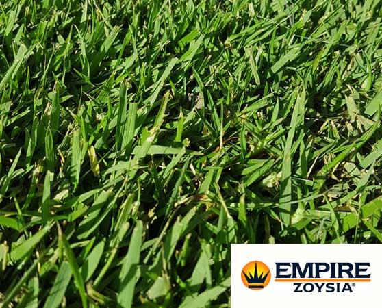 north brisbane zoysia grass turf supplier